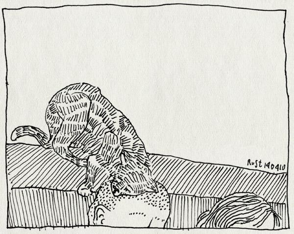 tekening 1063, bald, bank, cat, daf, daphne, femke, ikbendaf, kaal, kopjes, maasstraat, tijger, tijgertje, vijfke