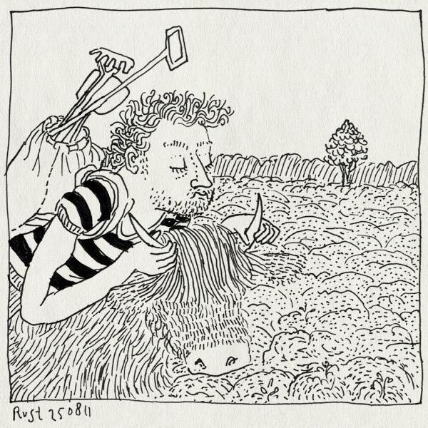 tekening 1559, hei, heide, highlander, rund, schotse hooglander, texel, vakantie