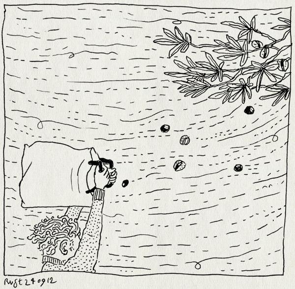tekening 1949, alwine, herfst, kastanjes, midas, noach, rapen, regen, storm, tas, verzamelen, wind
