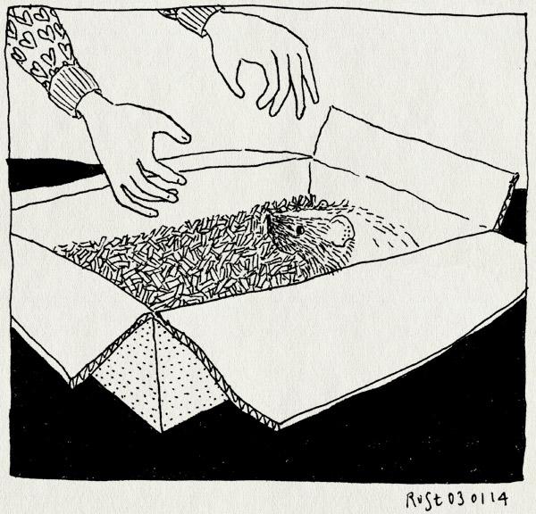 tekening 2415, alwine, bubbel, cavia, doos, heerhugowaard, nieuw familielid, tuincentrum, verjaardag