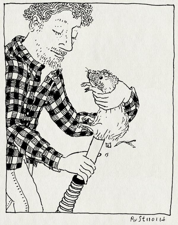 tekening 2423, bubbel, cavia, hooi, houtsnippers, huisdier, kont, stofzuiger