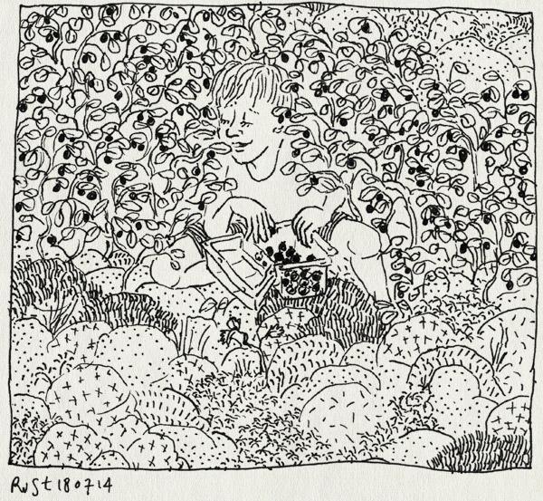tekening 2611, bakje, blåbär, blauwe bessen, bos, eten, lievelings, midas, moeras, mos, plukken, supermarkt, vakantie, vakantie2014, värmland, zweden