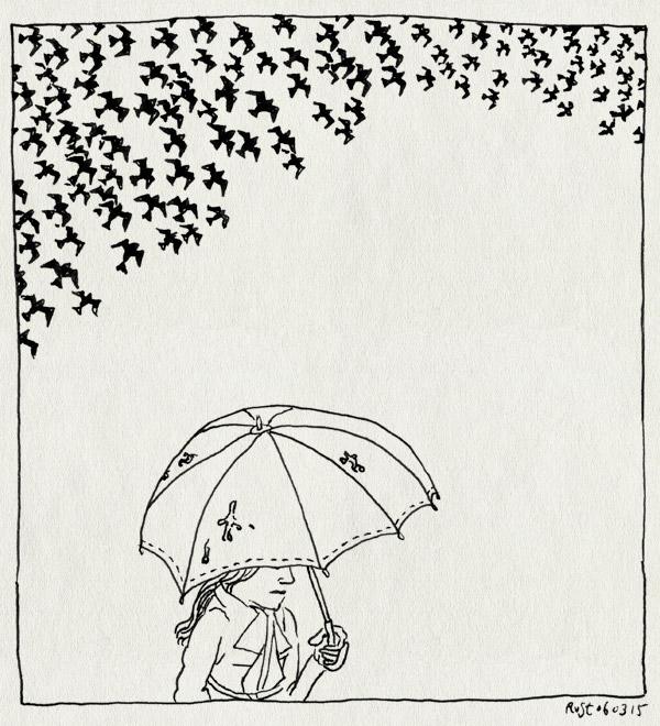 tekening 2842, bekogelen, martine spreeuwen, paraplu, starlings, swarm, vogelpoep, zwerm