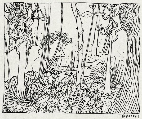 tekening 2907, bos, castricum, kikker, vangen