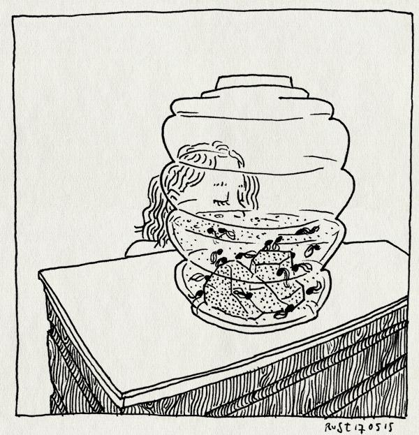 tekening 2914, alwine, aquarium, dikkopje, dikkopjes, kikkervisjes, thuis, vaas