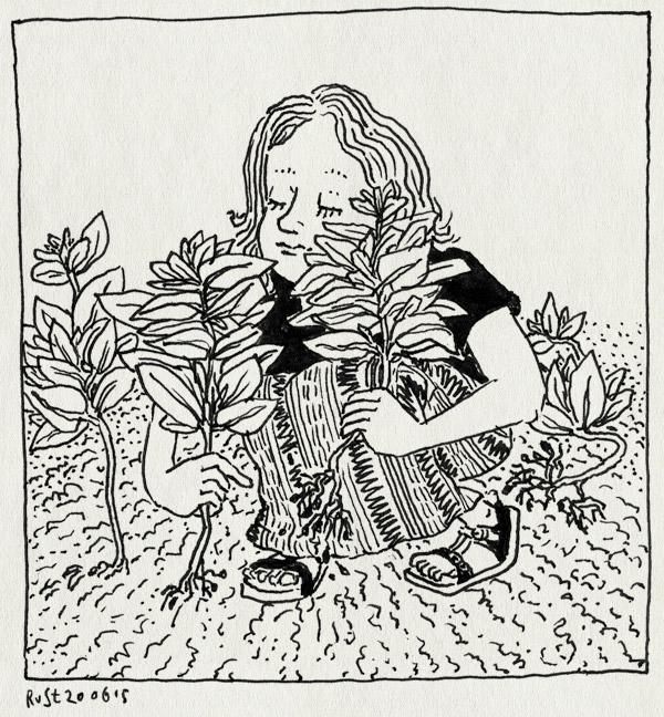 tekening 2948, ah, albert heijn, alwine, castricum, doorgeschoten, marcel, marije, moestuintje, oogst, plukken, spinazie, tuin