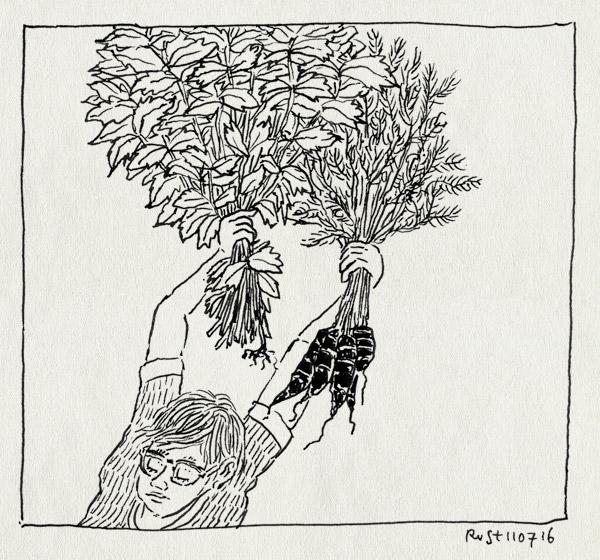 tekening 3335, bos, midas, radijs, radijsjes, schooltuinen, veel, wortel, wortelen