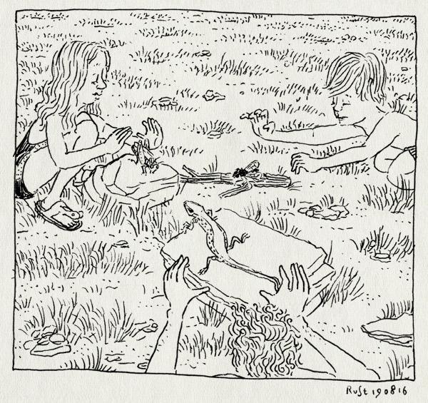 tekening 3374, alwine, camping, dieren, frankrijk, hagedis, jagen, la borio de roque, languedoc, midas, sprinkhaan, vakantie, vangen, vlieg